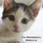 kitten_cover