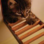 kittens_04